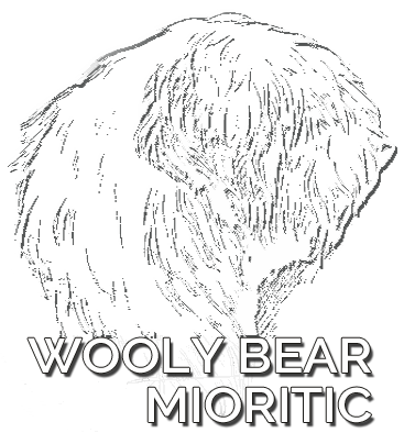 WOOLY BEAR MIORITIC