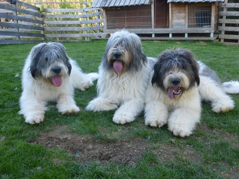 Triumvirat :-)